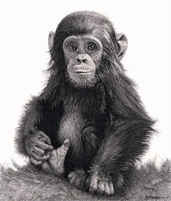 Realistic Animal Pencil Drawings (25)