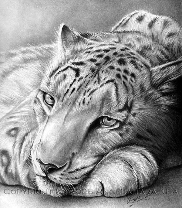 Realistic Animal Pencil Drawings (27)