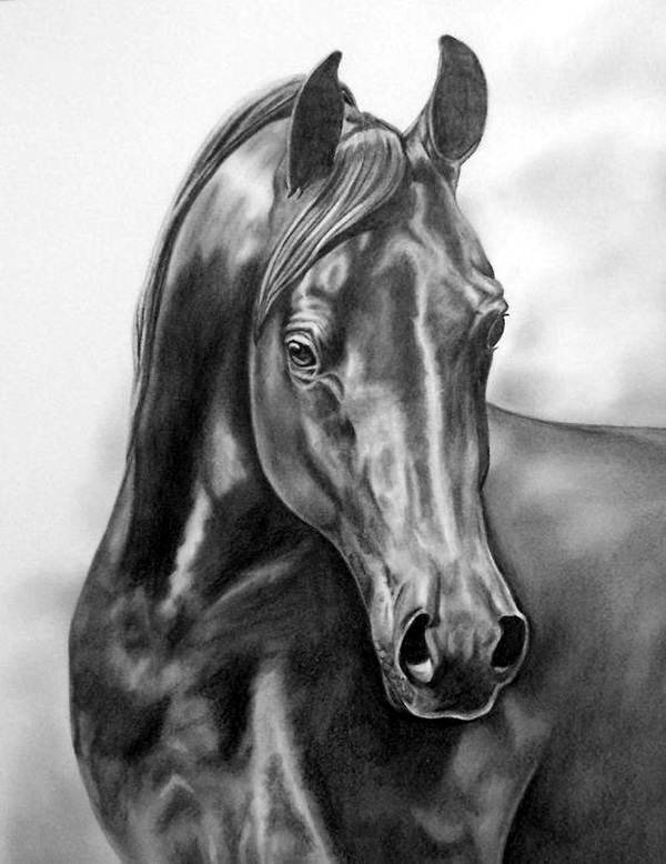 Realistic Animal Pencil Drawings (35)