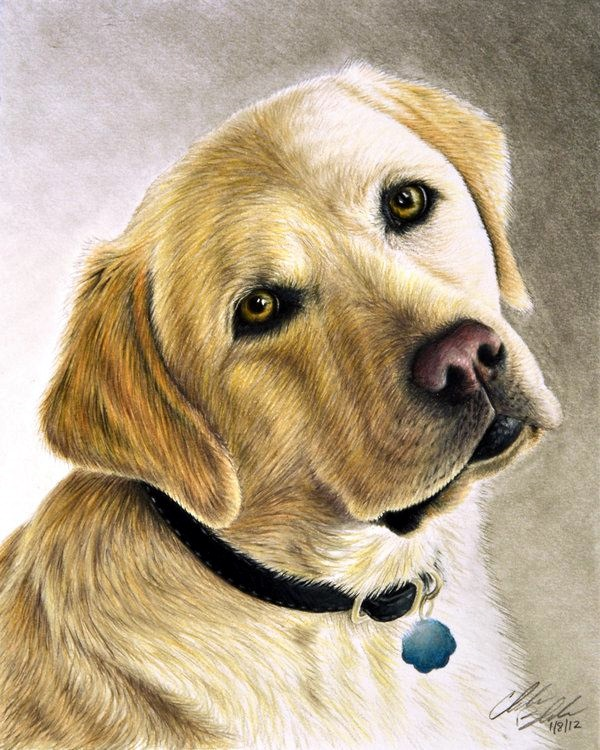 Realistic Animal Pencil Drawings (38)