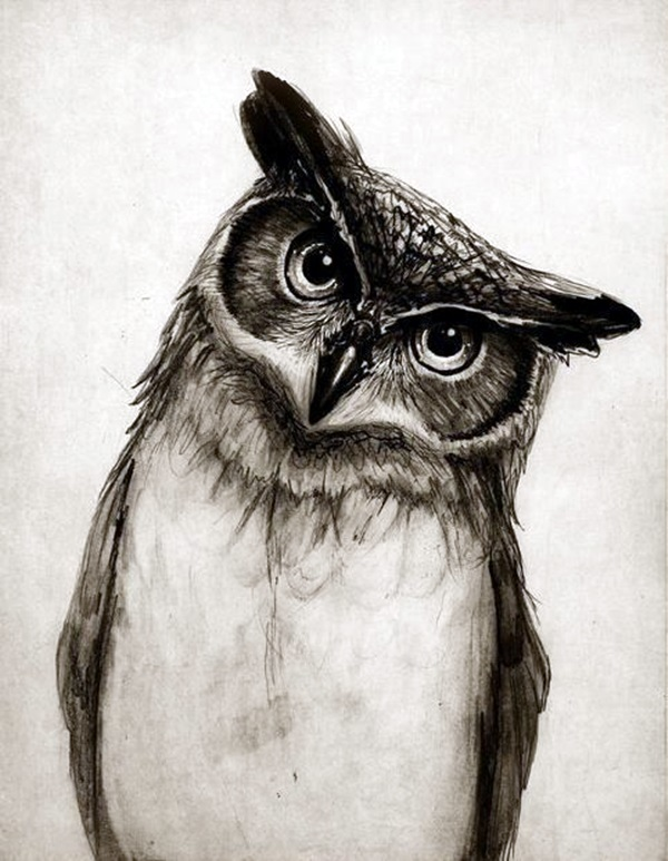 Realistic Animal Pencil Drawings (39)