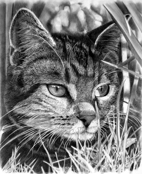 Realistic Animal Pencil Drawings (6)