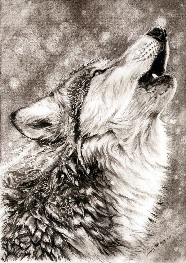 Realistic Animal Pencil Drawings (7)