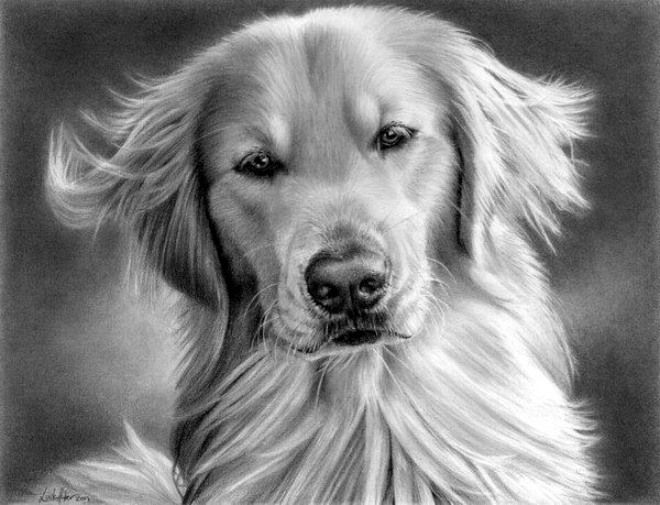 Realistic Animal Pencil Drawings (9)