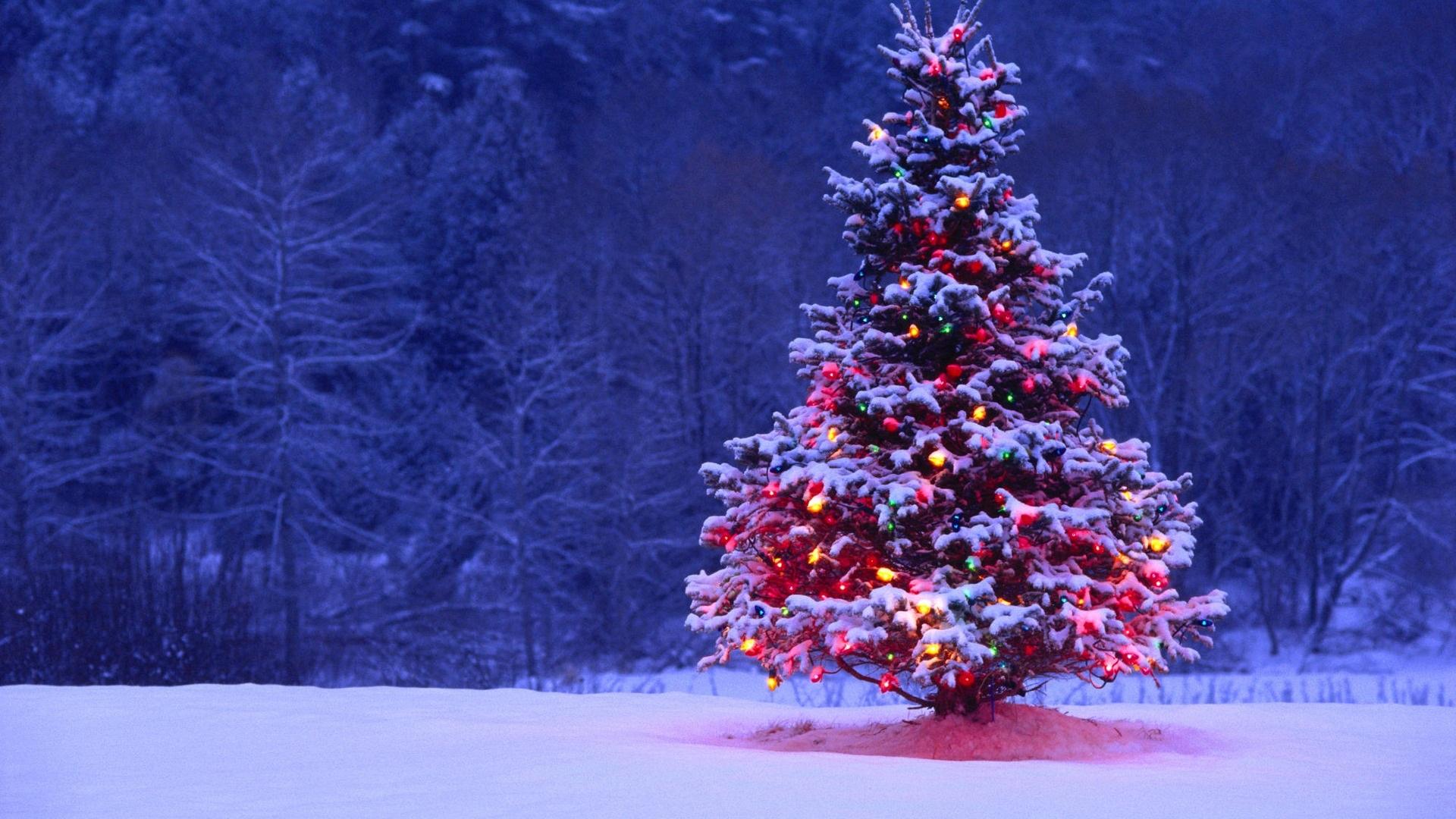 christmas tree wallpaper (16)