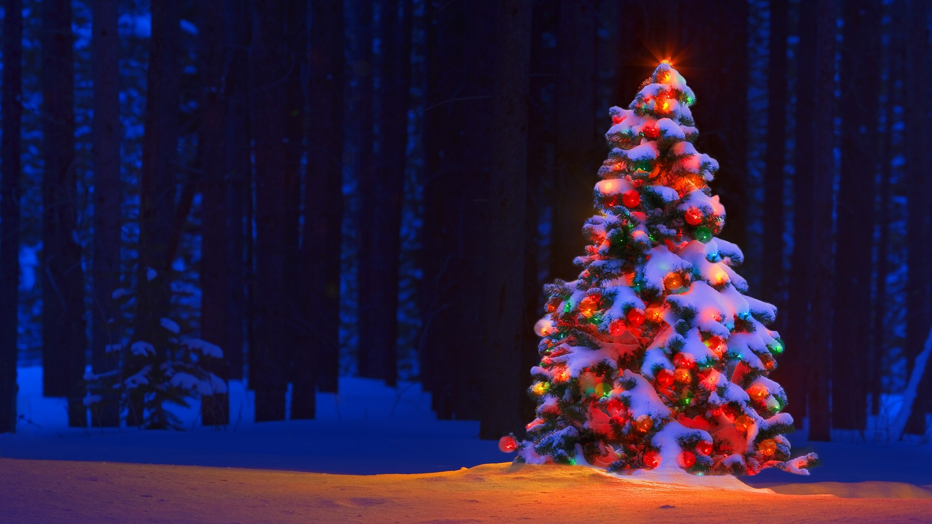 christmas tree wallpaper (2)