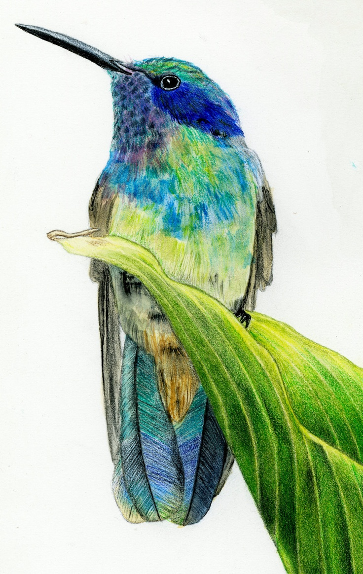 colored pencil art 1