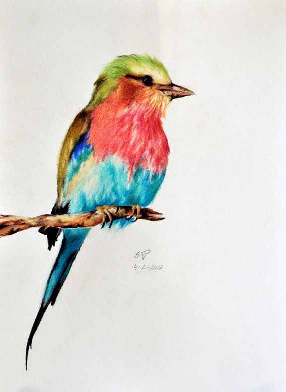 colored pencil art 11