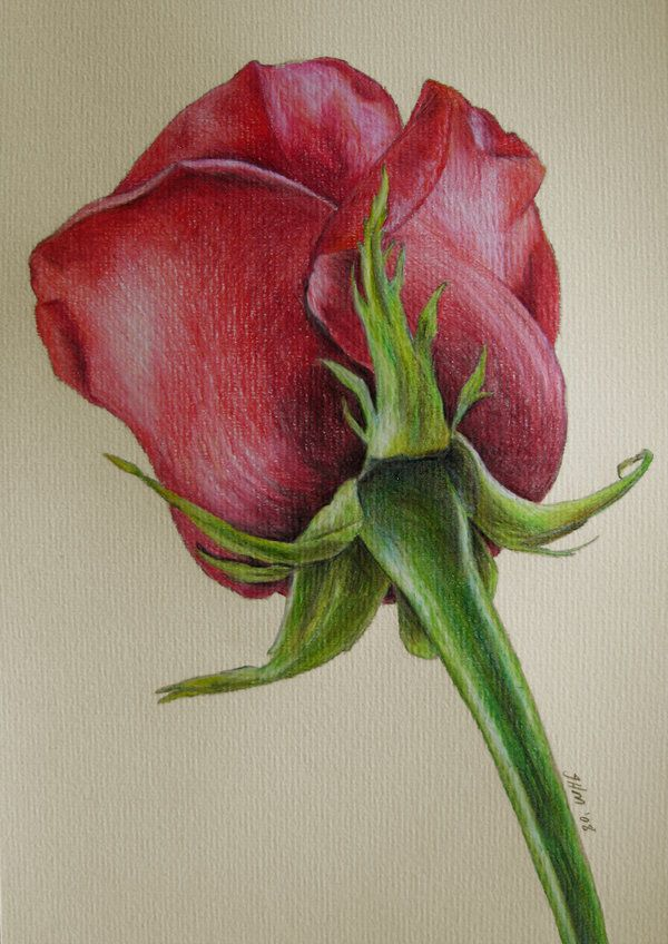 colored pencil art 12