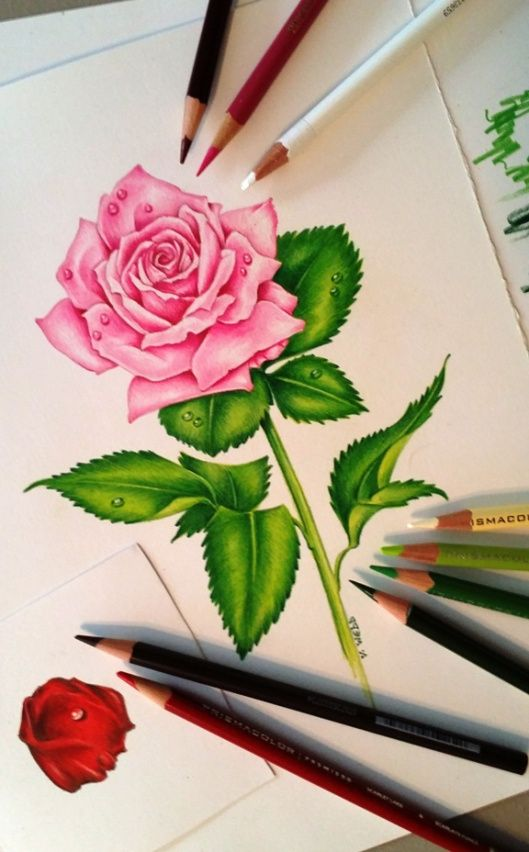 colored pencil art 9