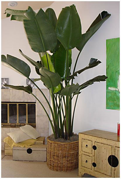 indoor plant ideas 18