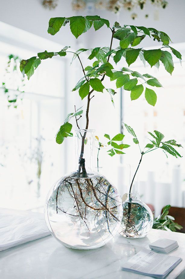 indoor plant ideas 21