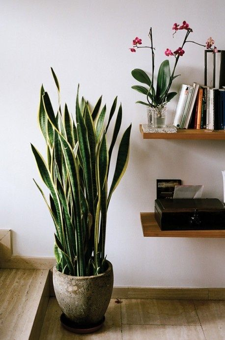 indoor plant ideas 22