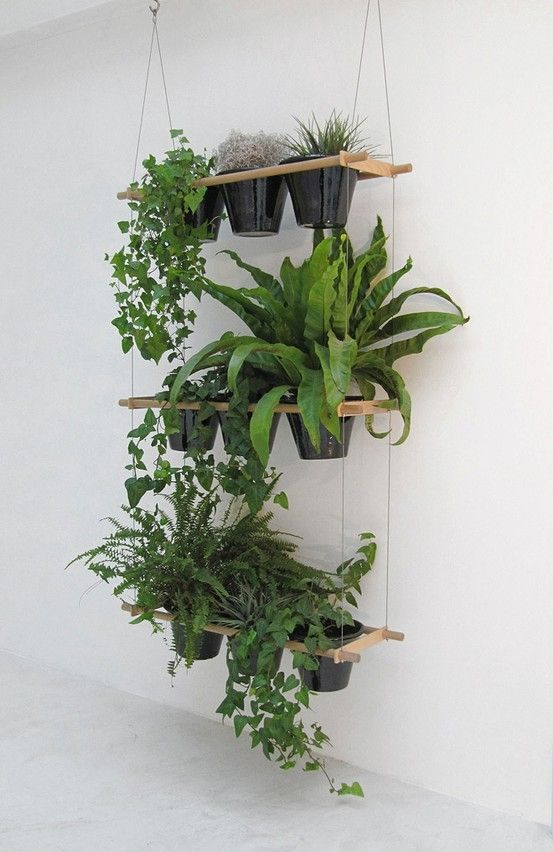 indoor plant ideas 23