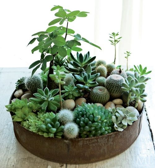 indoor plant ideas 24