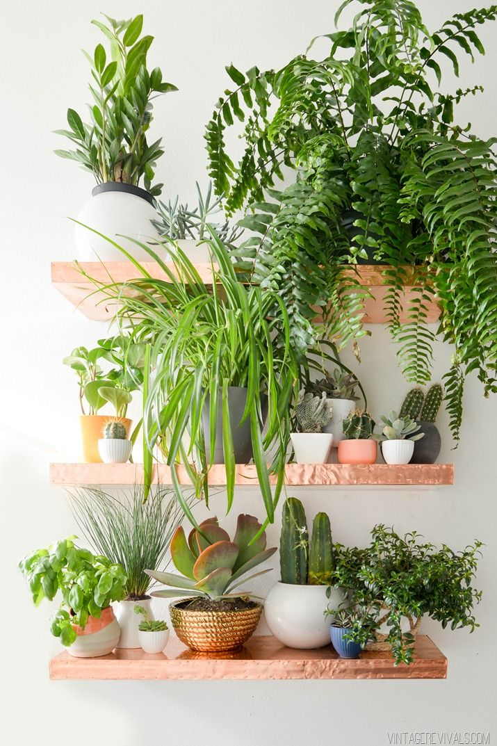 indoor plant ideas 27