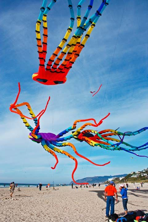 kite designs 13