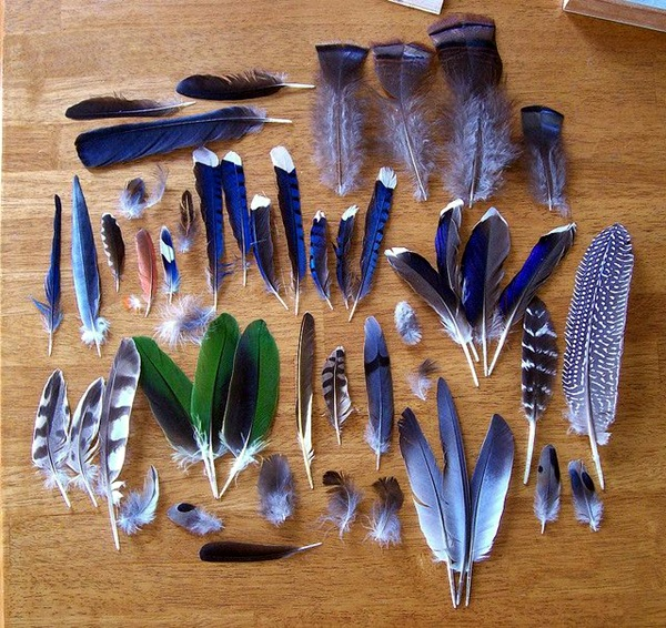An Amazing Hobby of painted feathers (24)
