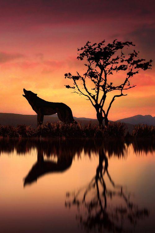 sunset photography 11
