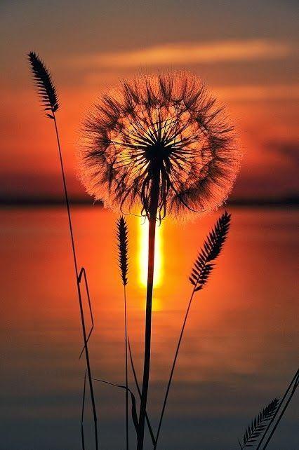 sunset photography 18