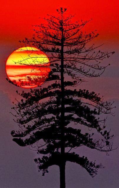 sunset photography 3