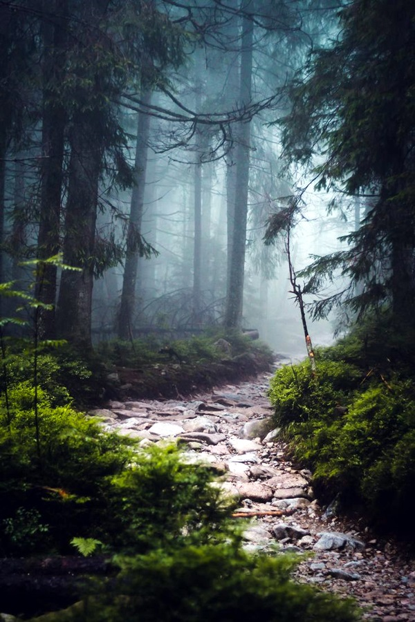 Fascinating Photographs of Forest Paths to another world (13)