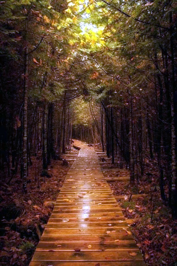 Fascinating Photographs of Forest Paths to another world (15)