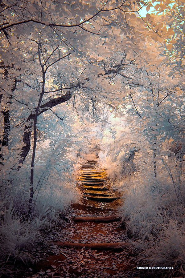 Fascinating Photographs of Forest Paths to another world (19)