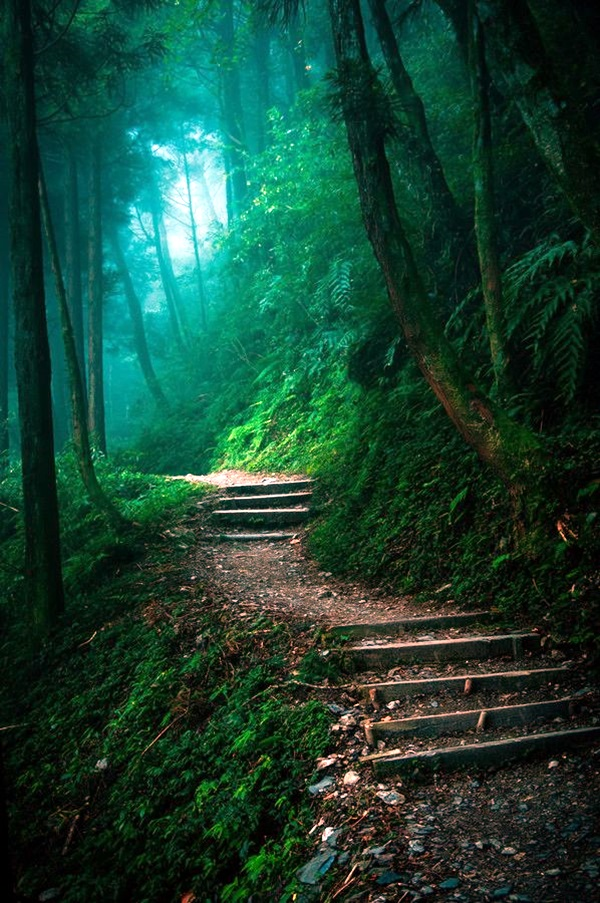 Fascinating Photographs of Forest Paths to another world (20)