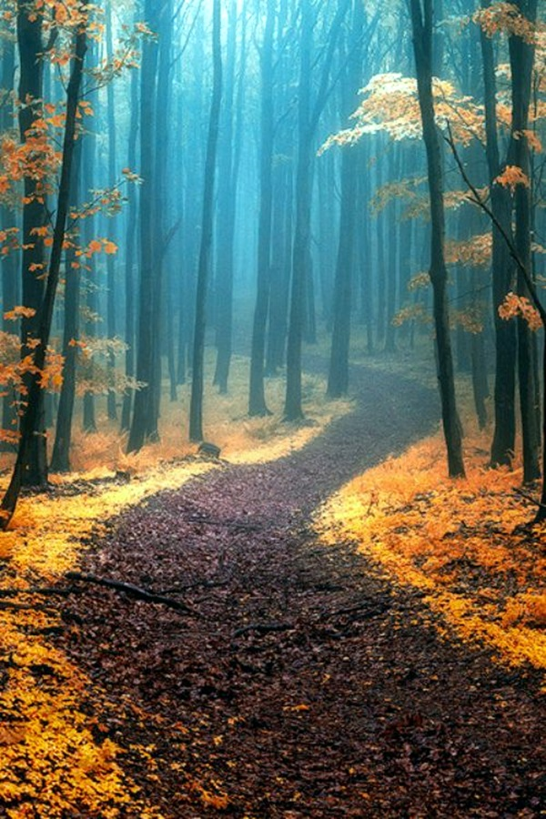 Fascinating Photographs of Forest Paths to another world (23)