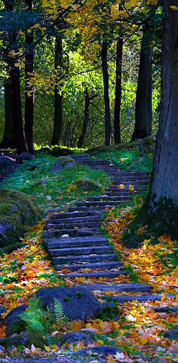 Fascinating Photographs of Forest Paths to another world (28)