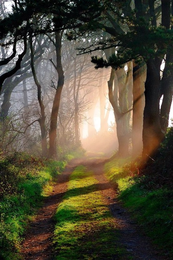 Fascinating Photographs of Forest Paths to another world (3)