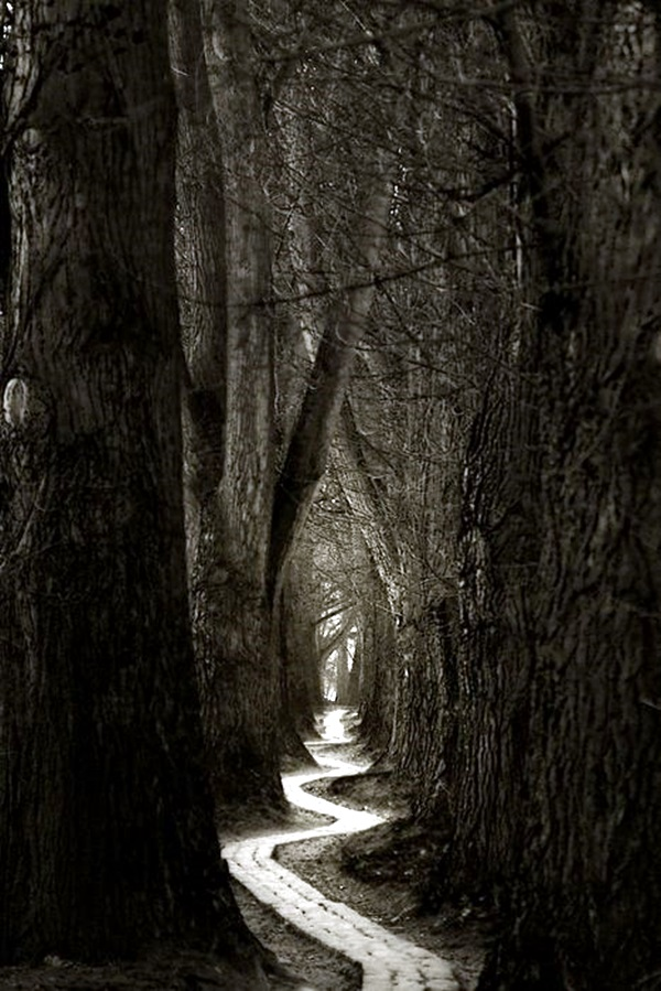 Fascinating Photographs of Forest Paths to another world (35)