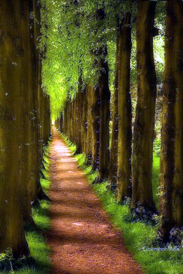 Fascinating Photographs of Forest Paths to another world (37)