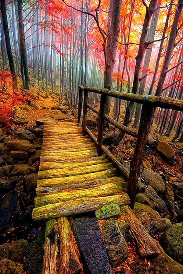 Fascinating Photographs of Forest Paths to another world (38)