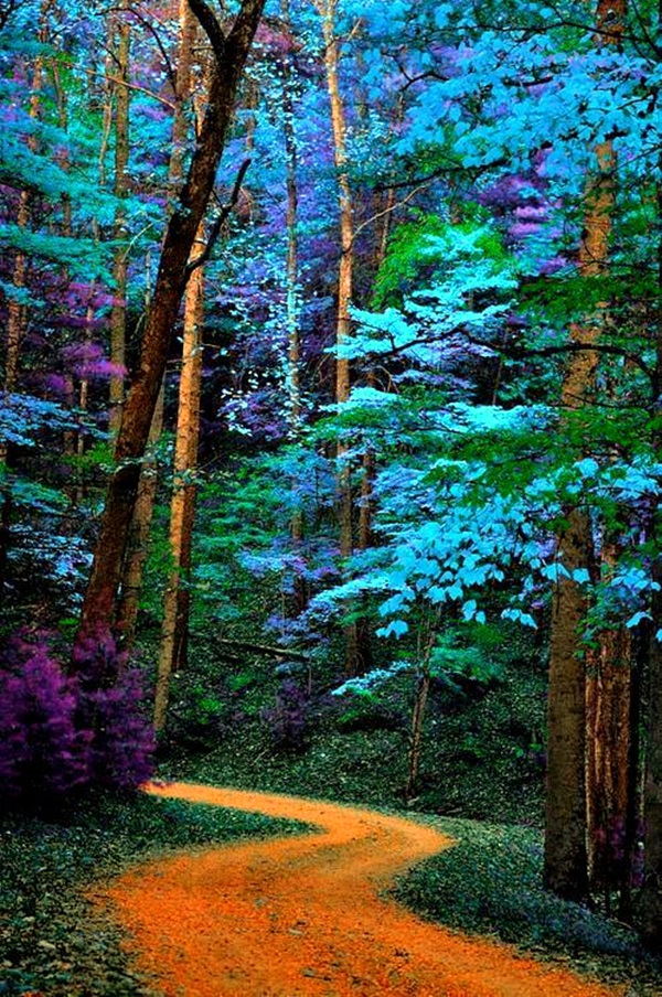 Fascinating Photographs of Forest Paths to another world (4)