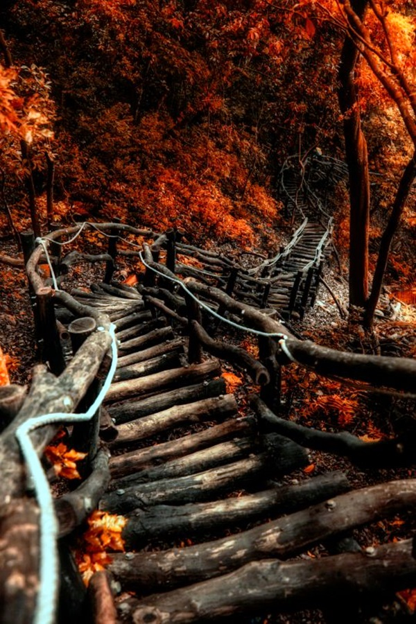 Fascinating Photographs of Forest Paths to another world (40)
