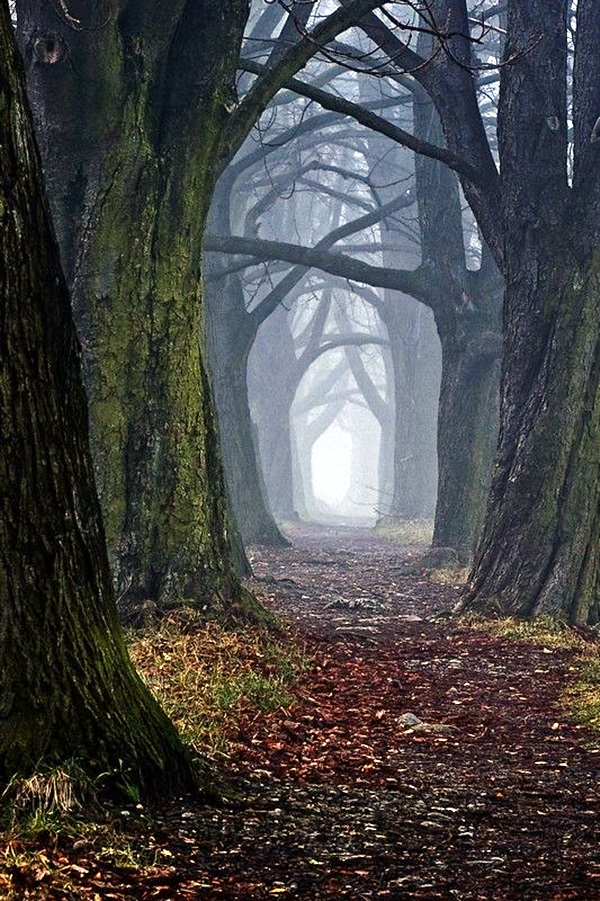 Fascinating Photographs of Forest Paths to another world (43)