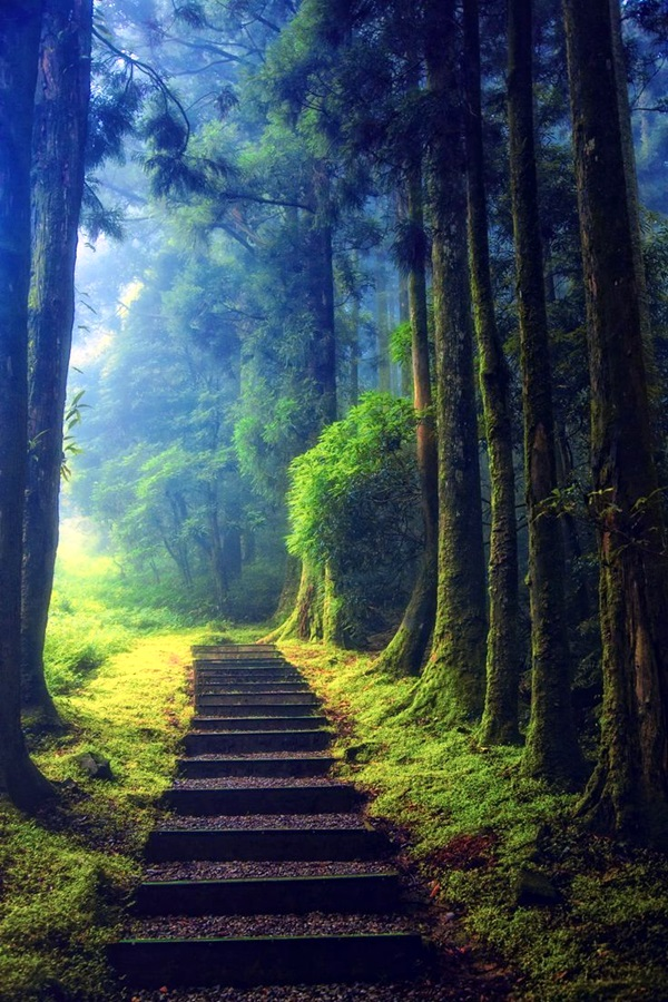 Fascinating Photographs of Forest Paths to another world (44)