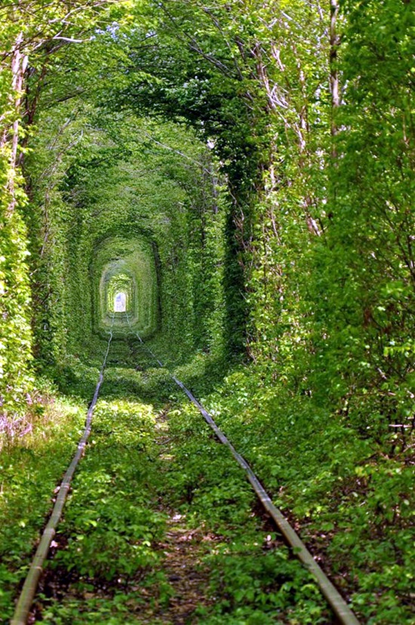 Fascinating Photographs of Forest Paths to another world (45)