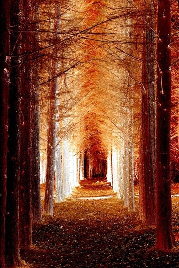 Fascinating Photographs of Forest Paths to another world (46)
