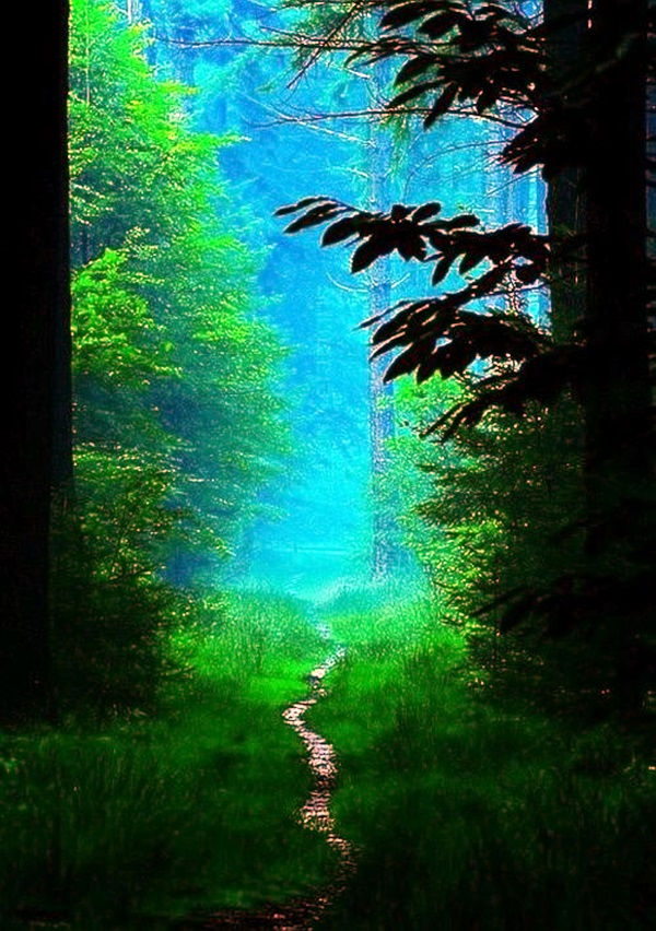 Fascinating Photographs of Forest Paths to another world (7)