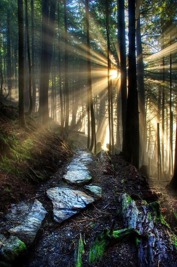 Fascinating Photographs of Forest Paths to another world (8)
