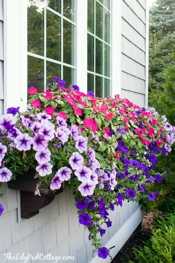 Magical window flower box ideas (25)