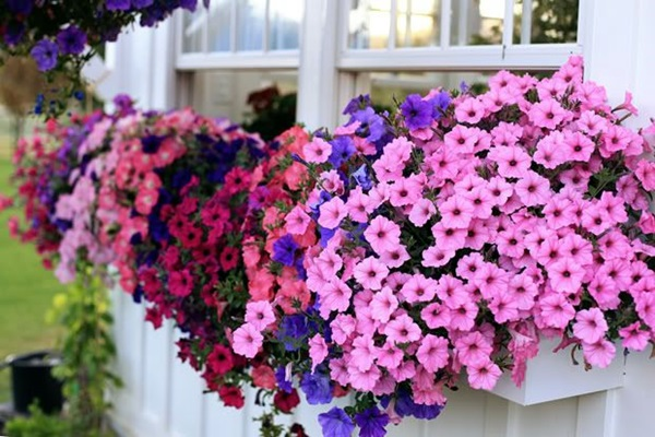 Magical window flower box ideas (28)