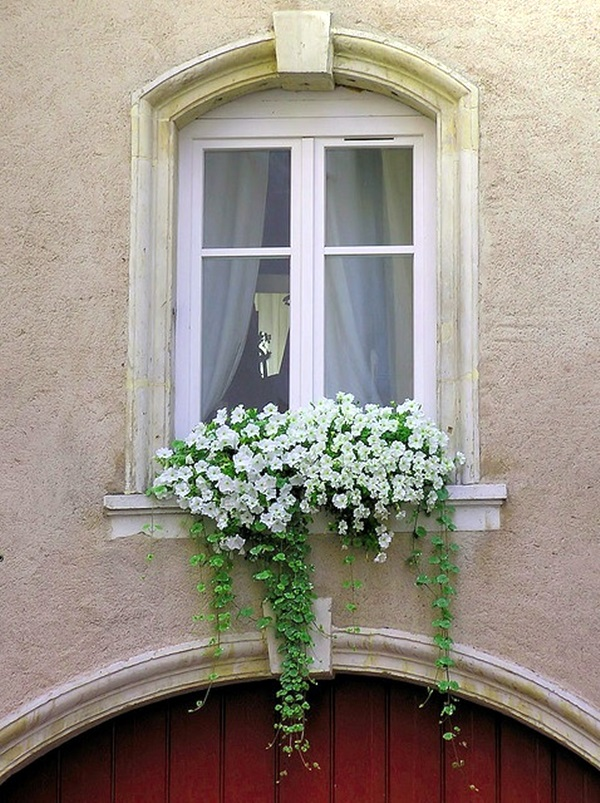 Magical window flower box ideas (6)