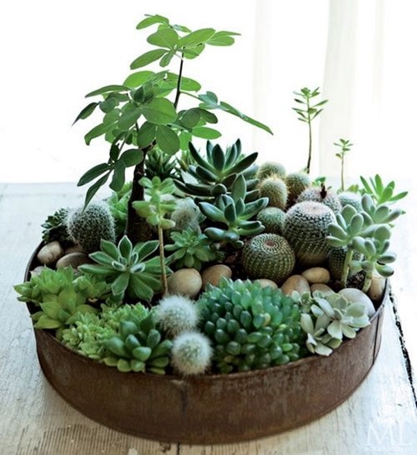 Smart Mini Indoor Garden Ideas (16)
