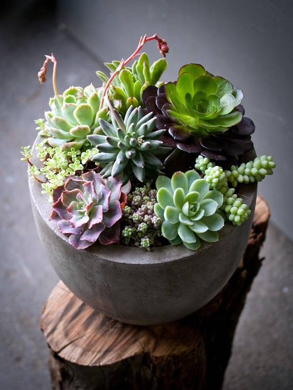 Smart Mini Indoor Garden Ideas (26)