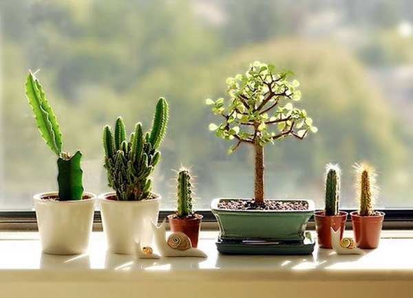 Smart Mini Indoor Garden Ideas (38)