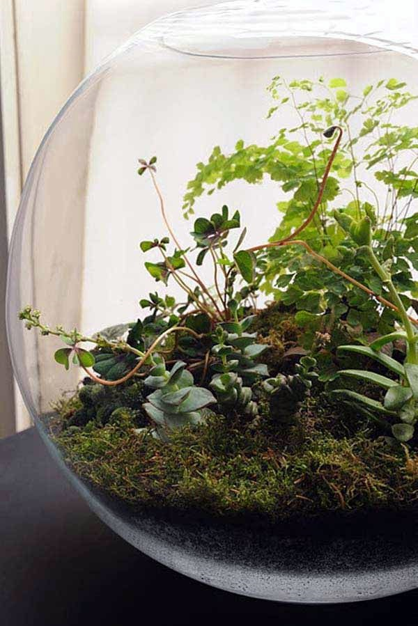 Smart Mini Indoor Garden Ideas (5)